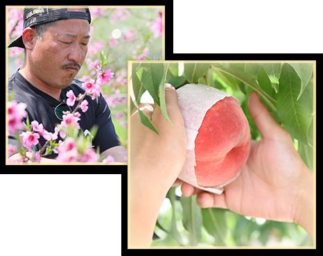 山形県天童市にある、美味しい果物を栽培・生産しているフルーツ果乃蔵のスタッフ写真