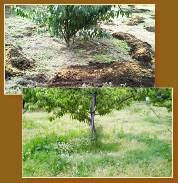 山形県天童市にある、美味しい果物を栽培・生産しているフルーツ果乃蔵の土づくりの様子を見る