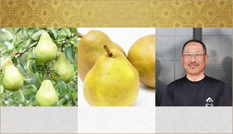 山形県天童市にある、美味しい果物を栽培・生産しているフルーツ果乃蔵の西洋梨の発育の様子