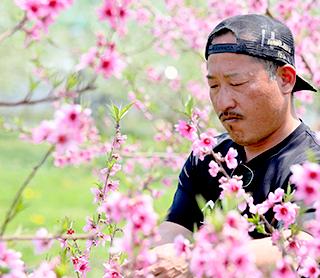 山形県天童市にある、美味しい果物を栽培・生産しているフルーツ果乃蔵のフルーツのこだわりの栽培方法